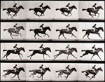 Sue Hubbard Art Critic Eadweard Muybridge Tate Britain