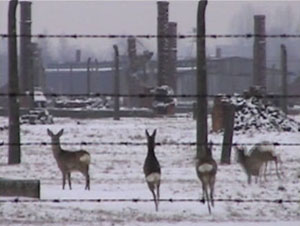 Miroslaw Balka Bambi (Winterreise) 2003