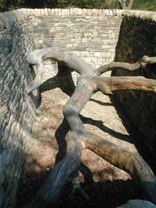 Andy Goldsworthy Hanging Trees 2007