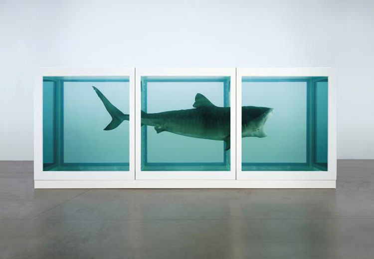 Damien Hirst The Physical Impossibility of Death in the Mind of Someone Living 1991
